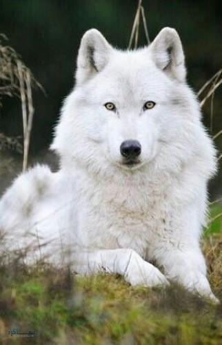 بک گراند حیوانات زیبا