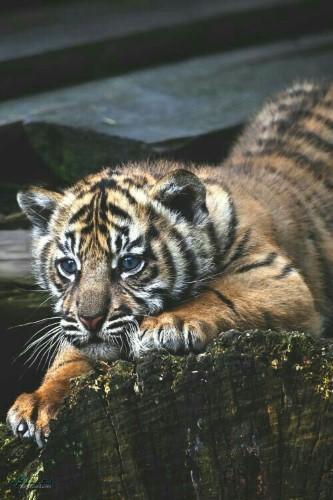 عکس های بک گراند حیوانات جدید