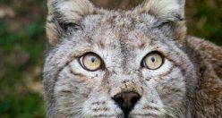 تصاویر بک گراند حیوانات + عکس های ناب زیبا حیوانات (۷)