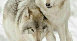 عکس بک گراند حیوانات + عکس های ناب زیبا حیوانات (۴)