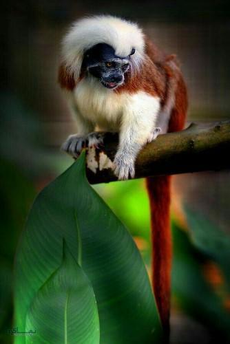 تصاویر های بک گراند حیوانات جدید