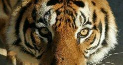 بک گراند حیوان + عکس های ناب زیبا حیوانات پس زمینه (۳)