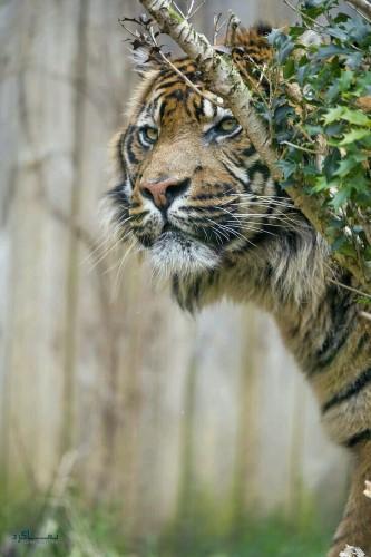 عکس های بک گراند حیوانات خاص