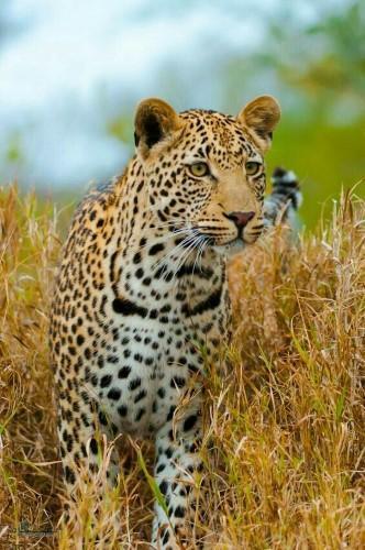 تصاویر های بک گراند حیوانات خاص