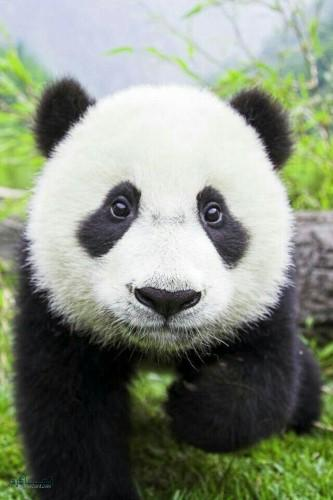 تصاویر بک گراند حیوانات