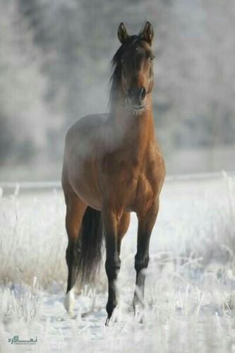 عکس های زیبای حیوانات برای پروفایل قشنگ