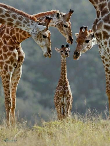 تصاویر های حیوانات زیبای پروفایل شیک