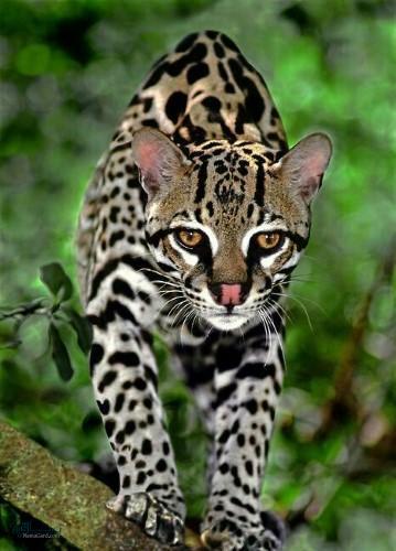 عکس های زیبا از حیوانات برای پروفایل شیک