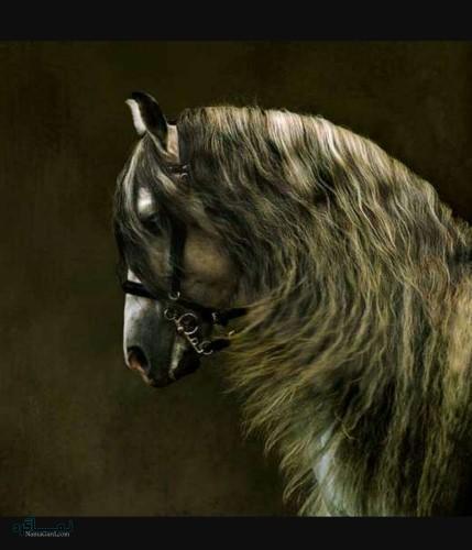 عکس های حیوانات زیبا برای پروفایل ناب