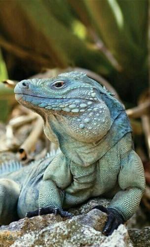 عکس های زیبا حیوانات برای پروفایل شیک