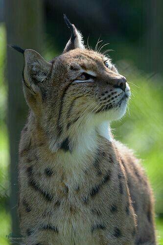 عکس های حیوانات زیبای خاص