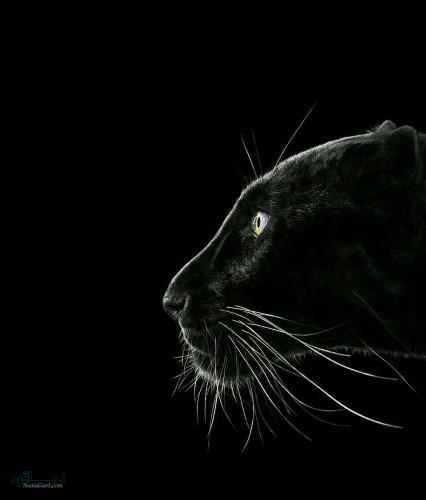 عکس های حیوانات زیبای جذاب