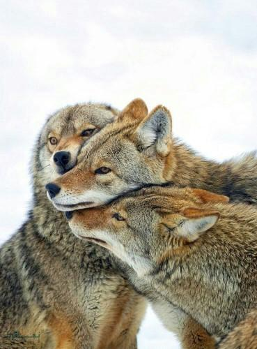 دانلود عکس های حیوانات زیبای جذاب