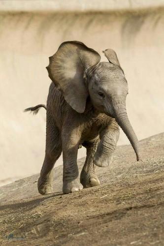 عکس های حیوانات زیبای جهان جدید