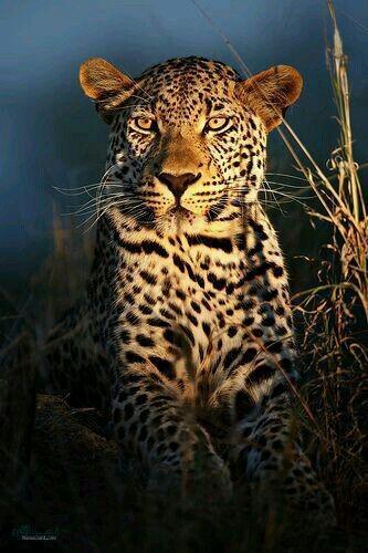 عکس حیوانات زیبای ناب