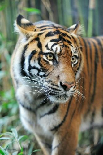 عکس حیوانات برای پروفایل قشنگ