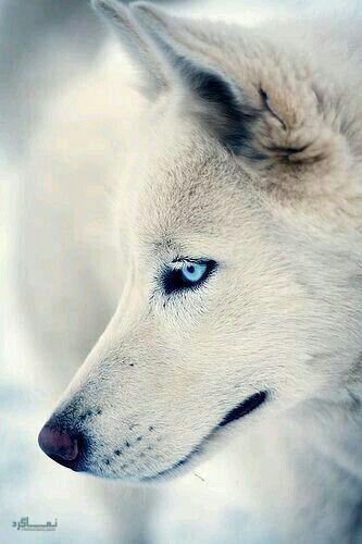 عکس زیبا از حیوانات برای پروفایل جدید