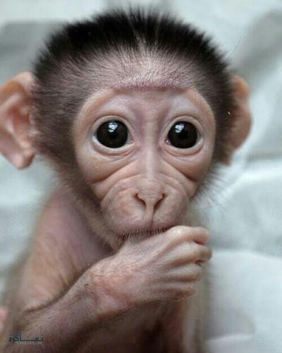 عکس های حیوانات زیبا پروفایل جدید