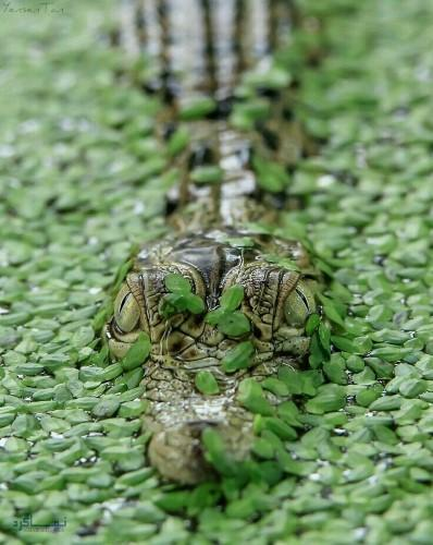 عکس زیبای حیوانات برای پروفایل شیک