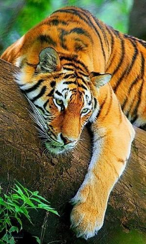 عکس حیوانات زیبا برا پروفایل ناب