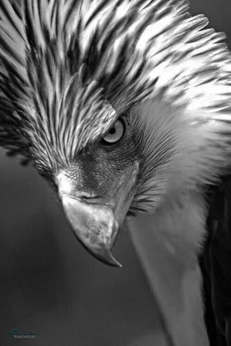 عکس های حیوانات زیبای جدید