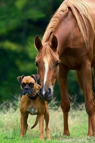عکس های حیوانات زیبا پروفایل خاص