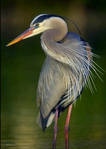 عکس های زیبای حیوانات برای پروفایل جذاب