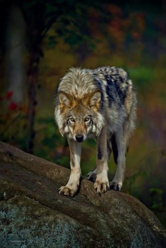 عکس حیوانات زیبا برا پروفایل جدید