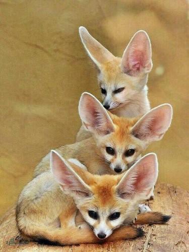 تصاویر های حیوانات زیبای پروفایل قشنگ