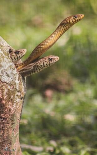 دانلود عکس های حیوانات زیبای متفاوت