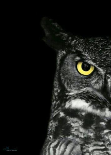 عکس حیوانات زیبای جدید