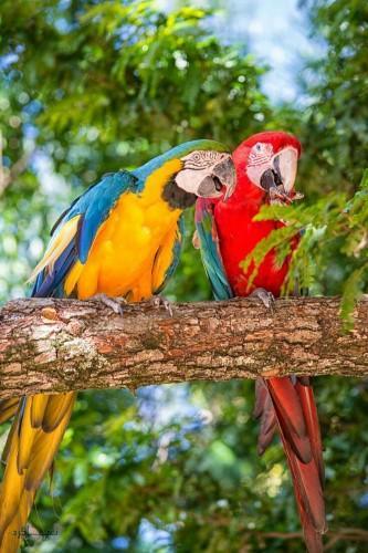 عکس های زیبا از حیوانات برای پروفایل ناب