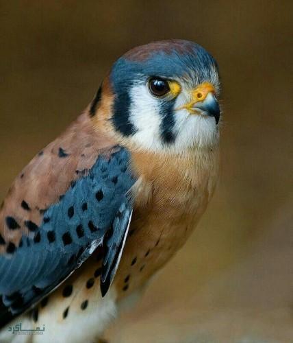 تصاویر های حیوانات زیبای پروفایل جذاب