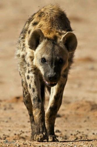عکس های حیوانات زیبای جهان خاص