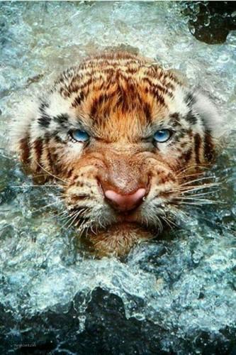 عکس زیبای حیوانات برای پروفایل ناب
