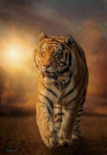 عکس حیوانات برای پروفایل جذاب