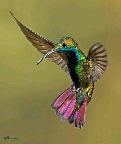 عکس زیبا از حیوانات برای پروفایل شیک