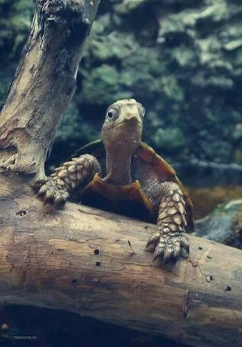 عکس های حیوانات زیبای شیک