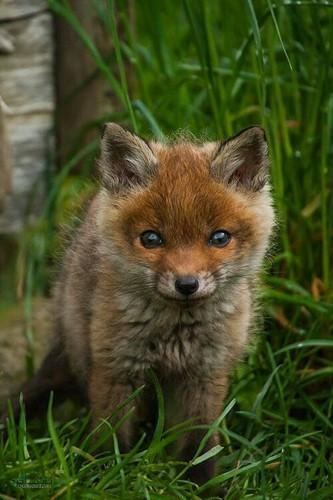 عکس زیبا از حیوانات برای پروفایل متفاوت