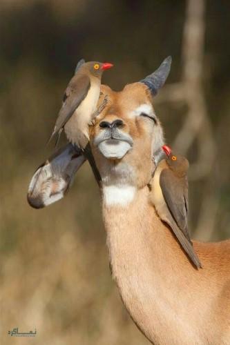 عکس های زیبا حیوانات برای پروفایل ناب