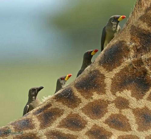 عکس حیوانات برای پروفایل زیبا