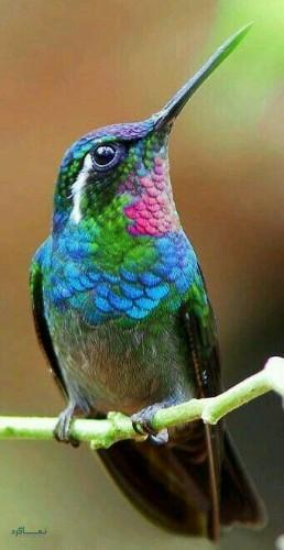عکس های حیوانات زیبا برای پروفایل جدید