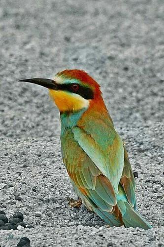 عکس های حیوانات زیبای جهان جذاب