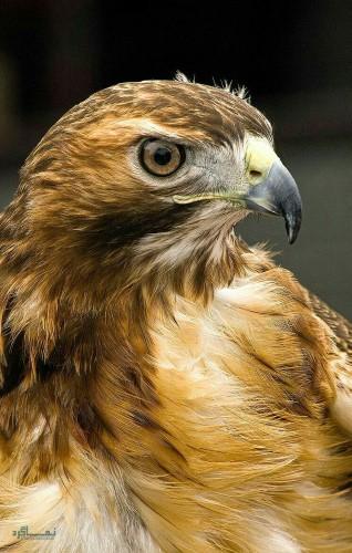 عکس های زیبای حیوانات برای پروفایل زیبا