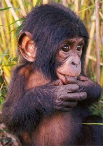 عکس حیوانات زیبا برا پروفایل شیک