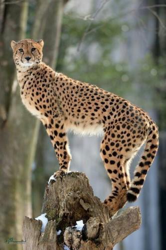 عکس حیوانات زیبای جذاب