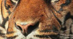 عکسهای زیبای حیوانات برای پروفایل + عکس های جانوران جدید ناب (۳)
