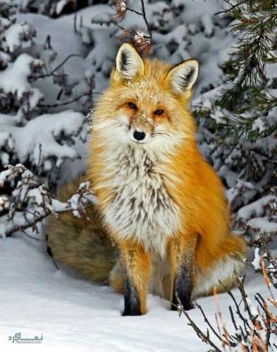 عکس های زیبا حیوانات برای پروفایل جدید
