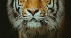 دانلود عکس حیوانات زیبای جهان + عکس های جانوران جدید ناب (۱۴)