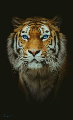 دانلود عکس های حیوانات زیبای جدید